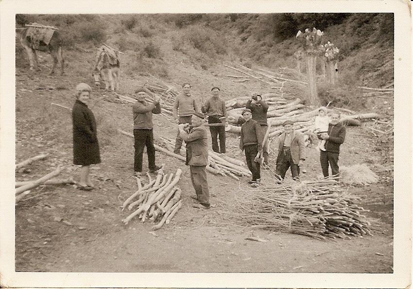 Foto antigua de explotación de madera