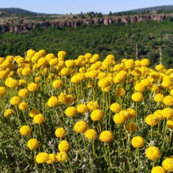 LOS NOMBRES DE LA PLANTAS EN CAMARILLAS
